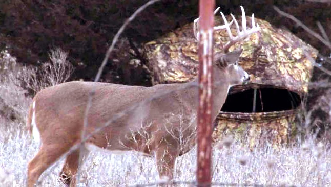 Hunting properties – What You Need To Know About Wildlife Management